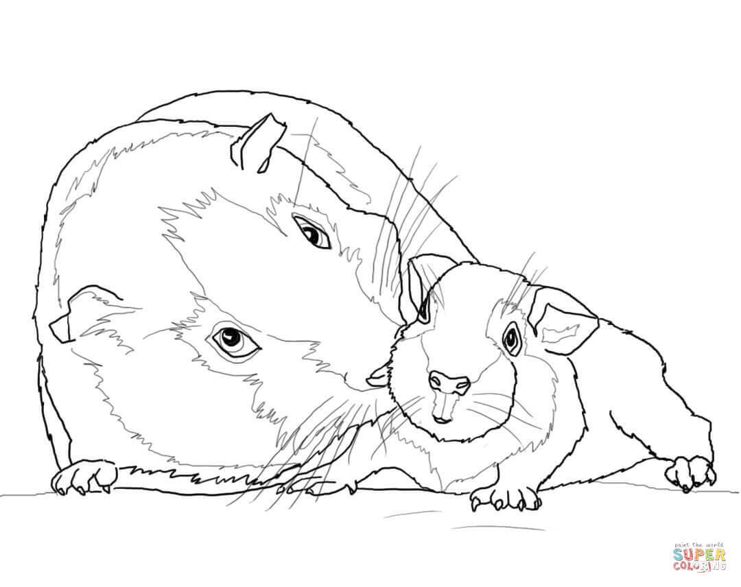30 Meerschweinchen Zum Ausmalen - Besten Bilder von ausmalbilder