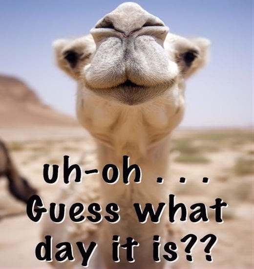 Uh Oh Guess What Day It Is Pictures, Photos, and Images ...