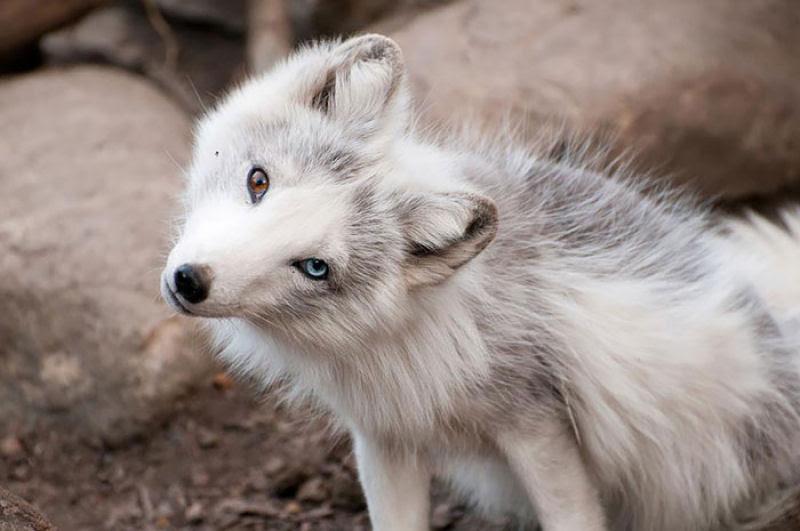 20 animais extraordinariamente belos com olhos ímpares 09