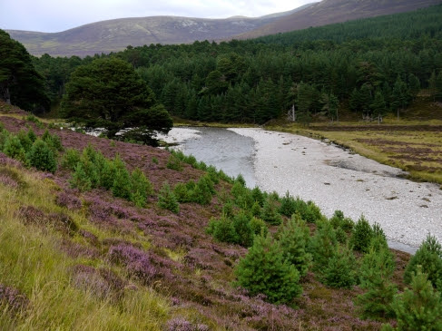 Glen Feshie - a new beginning