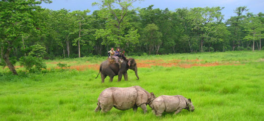 Chitwan National Park, the Real thing