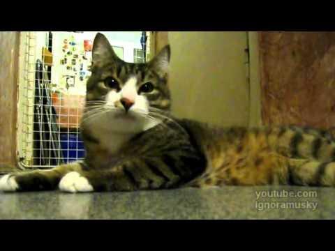 video que muestra a un gato cantando junto al sonido de una flauta