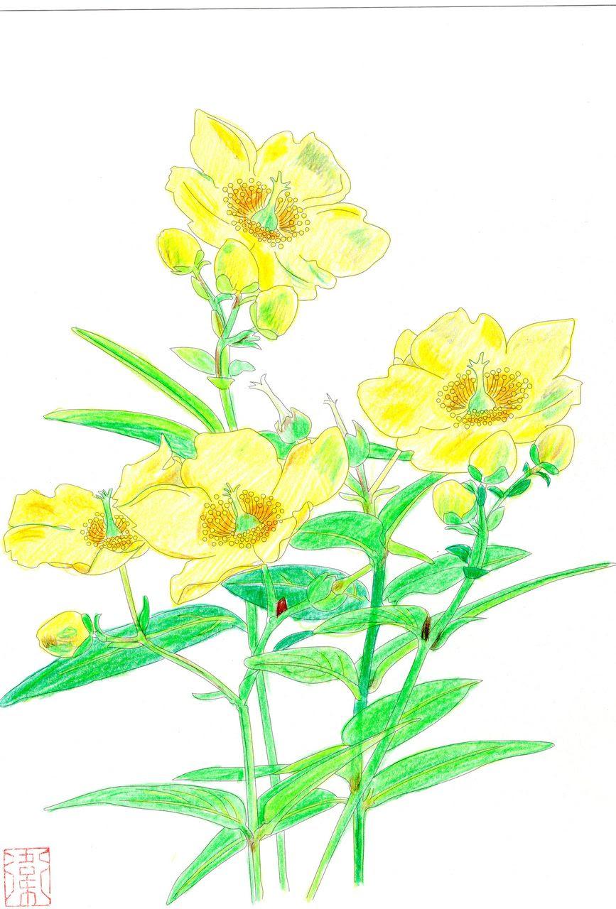 万年筆おやじの備忘録 大人の塗り絵 季節の花 Vol1 8