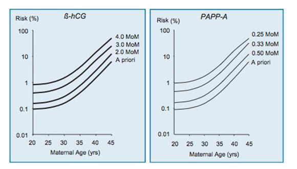 Beta Hcg Pregnancy Test Results Range - Pregnancy Symptoms