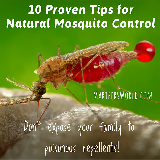 My Natural Mosquito Control Strategy