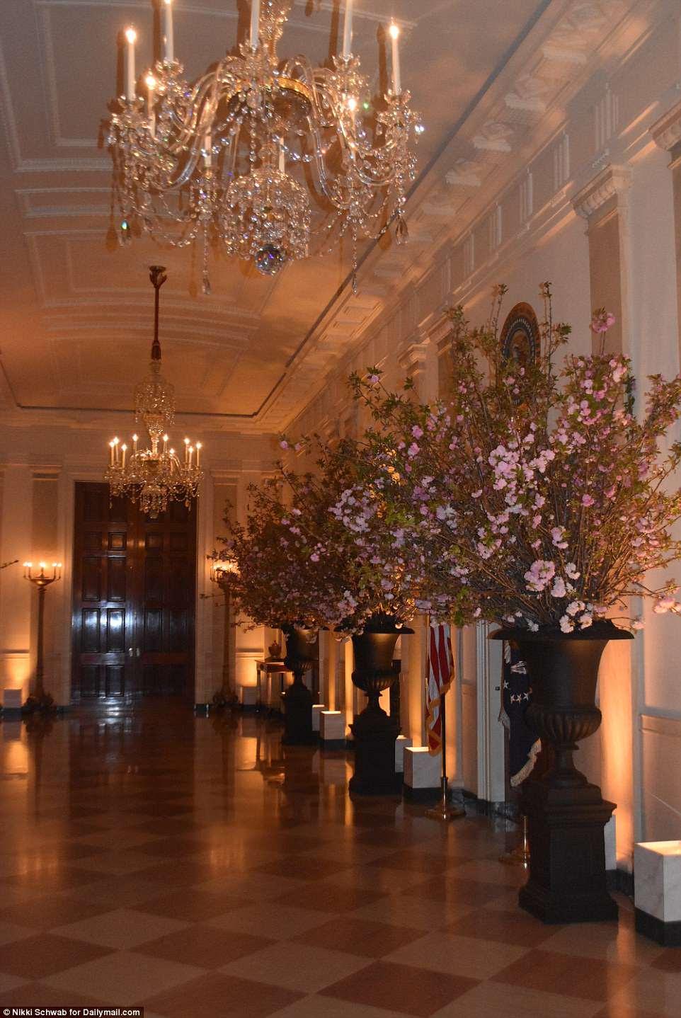Os vasos gigantes de flores de cerejeira são vistos na noite de segunda-feira no Cross Hall enquanto os repórteres foram brevemente autorizados a entrar na Casa Branca para ver o set-up do jantar de terça-feira à noite com a França.
