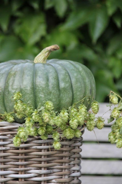 fleaingfrance pumpkin and hopps