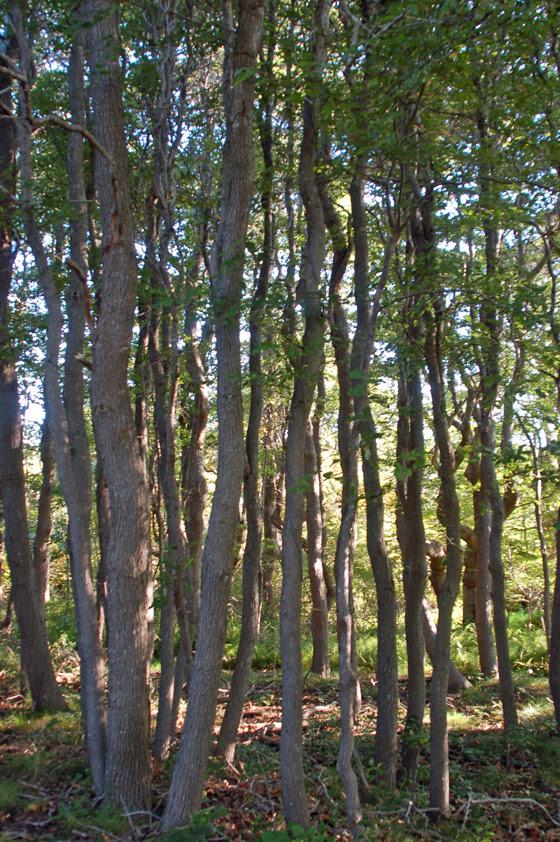 very-vertical-forest!-copy.jpg