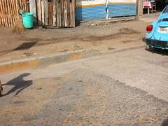 Street dog, shadow, blue