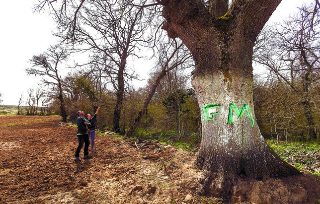 Juan Carlos Chicote y su hija Alba observan los daños que sufre el árbol.  Alberto Rodrigo
