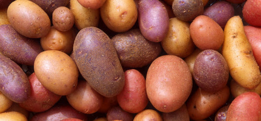 Latest in Paleo 158: The Potato Hack, Weight Loss Simplified
