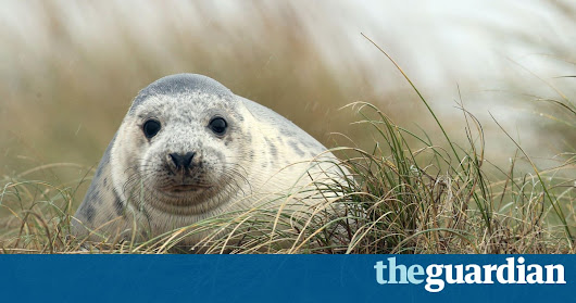 10 of the best British wildlife walks | Travel | The Guardian