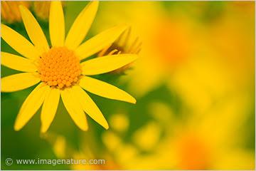 Macro photo of yellow flowers