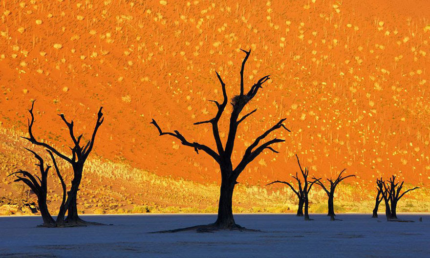 cool-unbelievable-places-Earth-Namibia