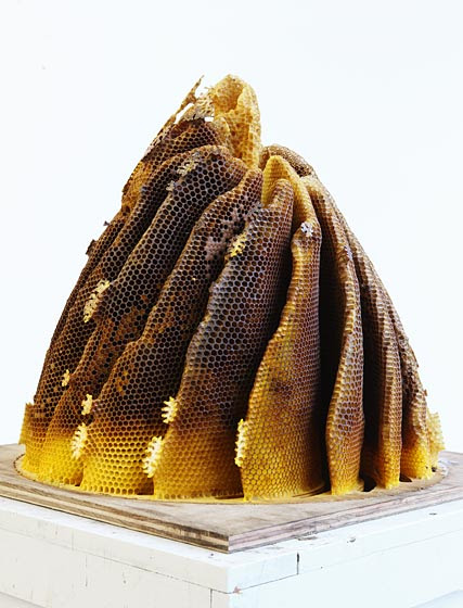 Hillary Berseth's collaboration with honeybees
