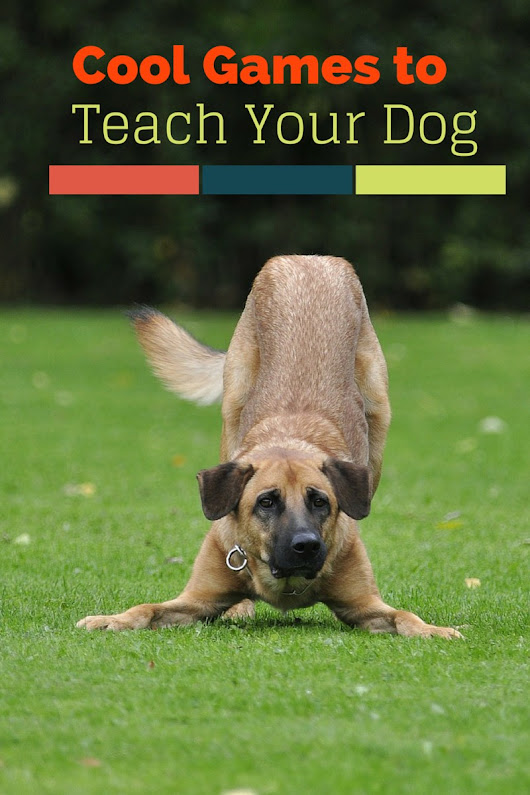 Five Cool Games You Can Teach Your Dog- DogVills | DogVills