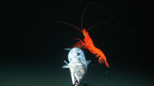 Camera lowered into deep ocean trench finds unexpected creatures