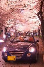 桜コペン02