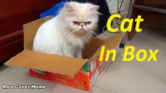 christmas vacation cat in box big cat in box 2016 meo cover home