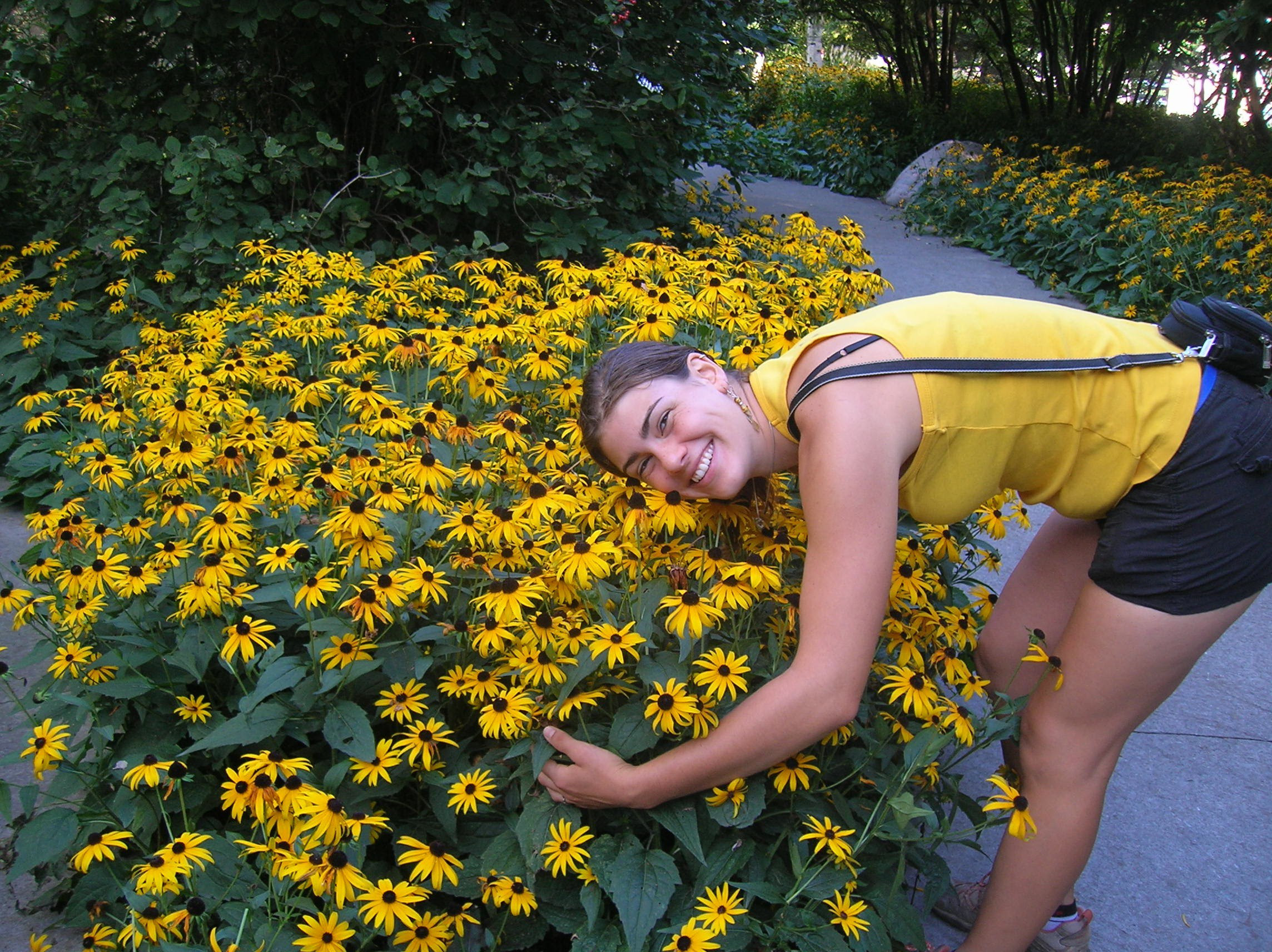 How To Grow Black Eyed Susan Growing And Caring For Rudbeckia
