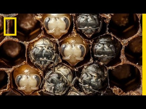 Miraculous video of the birth of bees!