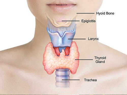Is Your Thyroid Really Running the Show? | Dr. William Davis