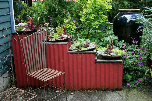 succulent dishes