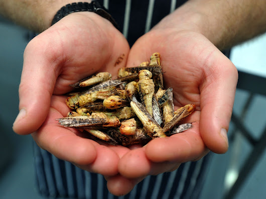 Paying a visit to Britain's first insect-only restaurant
