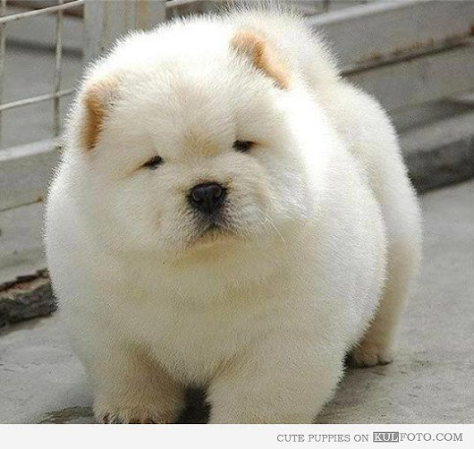 Widely used White Chubby Adorable Dog Thought