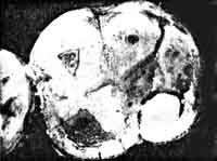 Piltdown Molar Surface
