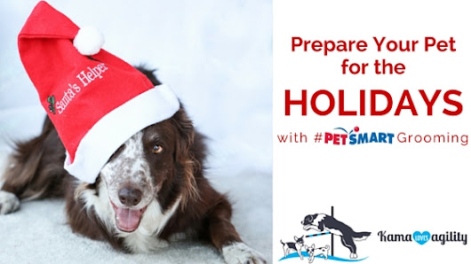 Prepare Your Pet for the Holidays with #PetSmartGrooming