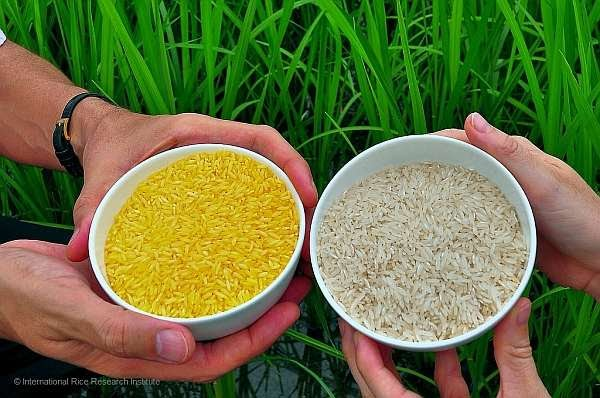 Legislature to support Vitamin A-rich Golden Rice release with studies proving efficacy in reducing Vitamin A deficiency