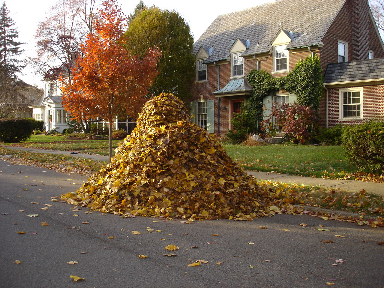 Image result for leaf pile pictures