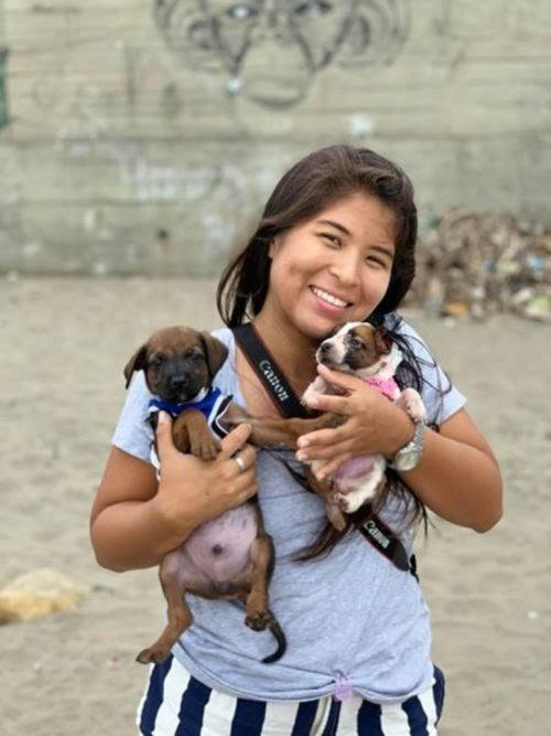 Graba el momento en que decenas de perros caen rendidos tras ser rescatados de las calles