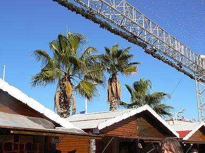 palmiers et marché de Noël.jpg