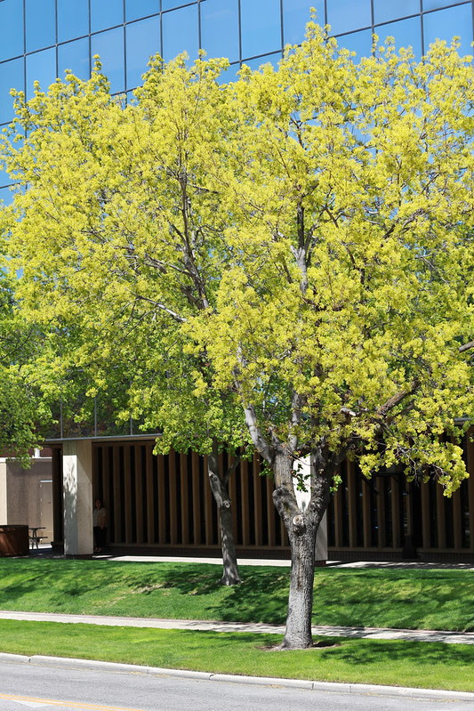 more gorgeous trees by replicate then deviate