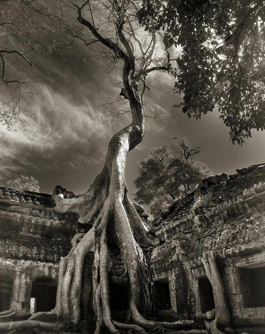 arboles-antiguos-beth-moon4