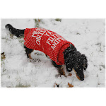 Merry Christmas Ya Filthy Animal Ugly Christmas Sweater - FOR SMALL PETS (Pet Size: Medium) | Men's & Women's Ugly Christmas Sweaters