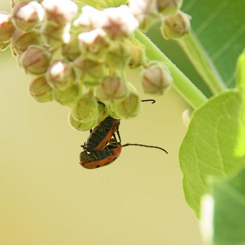 Hot bug-on-bug action