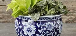 White Ceramic Pots For Indoor Plants