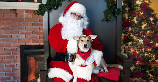 Happy Holidays to Our Furry Friends | The Vet House | 972-690-8741 | Richardson, TX