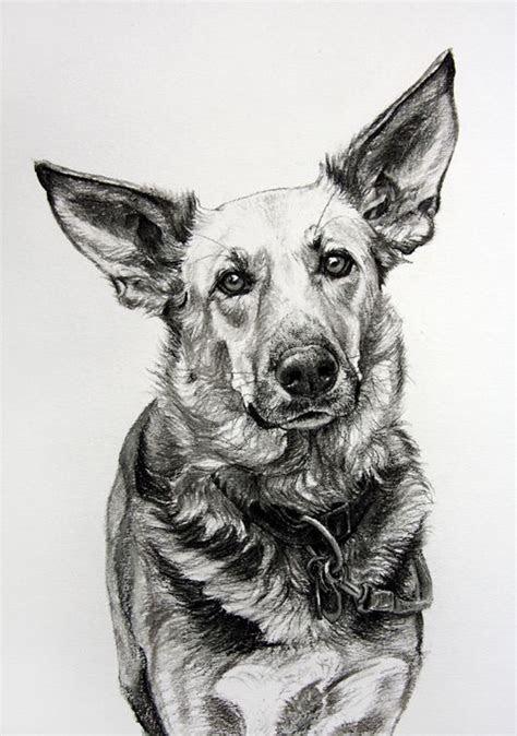 dog art  amy  ears   charcoal  paper