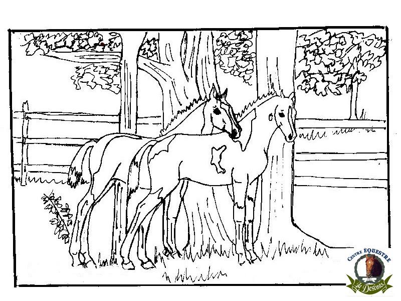 296 Dessins De Coloriage Cheval à Imprimer Sur Laguerchecom Page 22