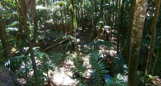 Conondale Rainforest