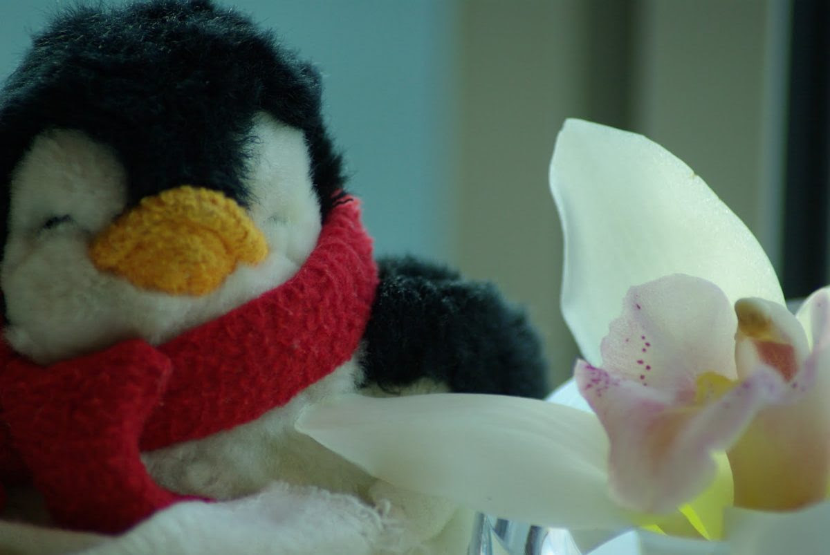 A small, stuffed penguin in a red scarf sits next to a delicate flower petal