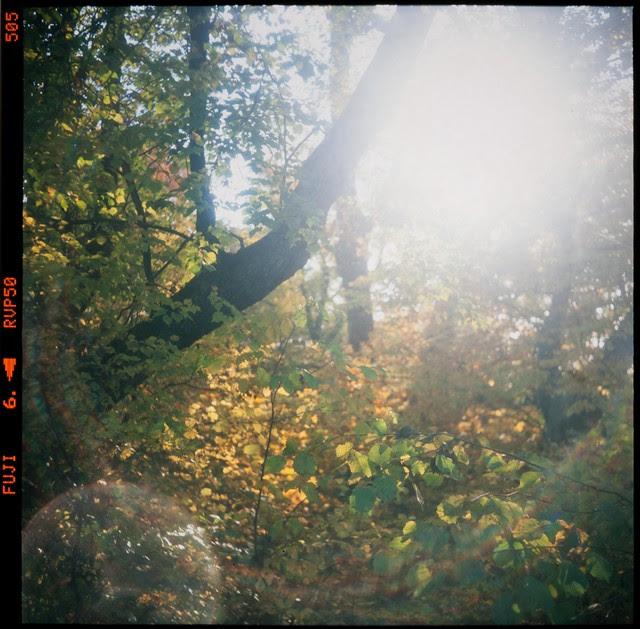 blinding autumn sun