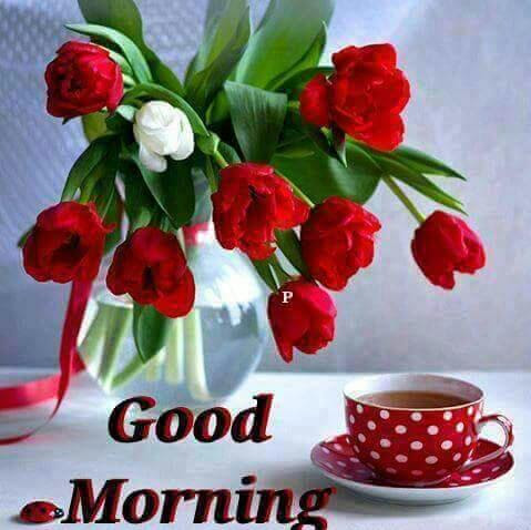 15 Latest Good Morning Beautiful Images Greetings1