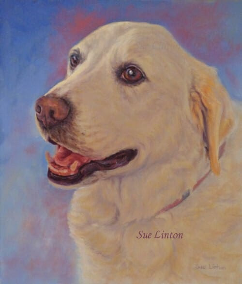A dog portrait of a Labrador dog