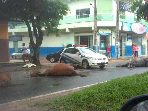 Cavalos foram mortos na Avenida São Paulo, em Teixeira de Freitas (Foto: Rafael Vedra/Site Liberdade News)