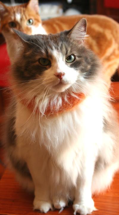 Kaesea wearing a fuzzy link
